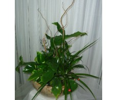 Foliage Plant Display