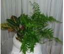 Potted Plants (10)