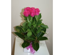 12 Hot Pink Rose's - Mini Box